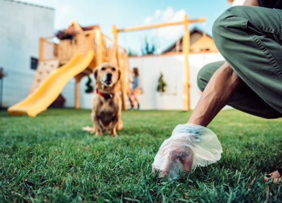 The 5 Best Biodegradable Dog Poop Bags